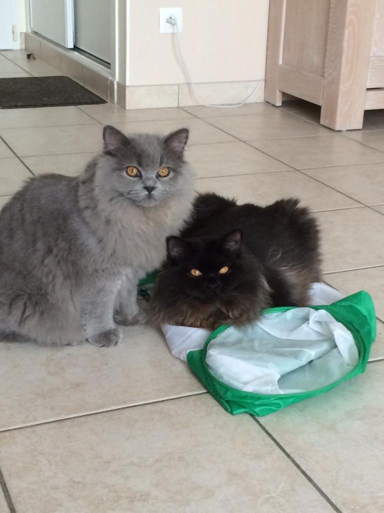 Jadore et Jezzy 8 mois